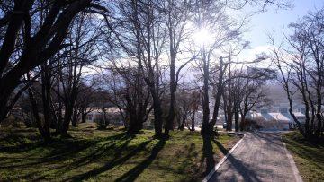 Ambiente boscoso3